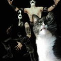 Heavy Metal Kedi