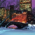 1447066-winter,world,New York City,Central Park
