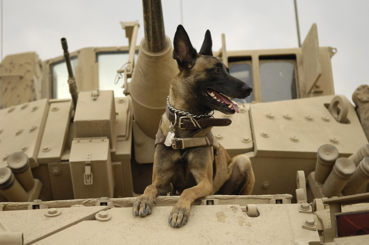 366856-Malinois,Belgian Shepherd,war,military,dogs,tanks.jpg