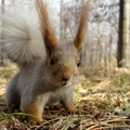 1717076-animals,squirrels