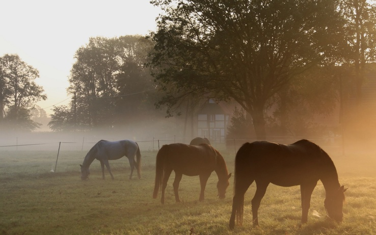 1719387-landscapes,animals,fields,horses.jpg