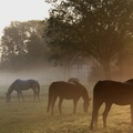 1719387-landscapes,animals,fields,horses