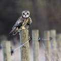 1719510-owls,pole,wood