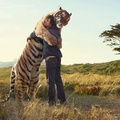 1728138-tigers,wildlife,fields,hug,nature,love,animals