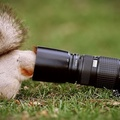 1728181-animals,grass,squirrels,photo camera