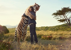 1728192-pants,nature,jeans,love,Sun,animals,tigers,wildlife,men,long hair,jackets,hug,denim clothing