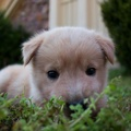 1738302-animals,dogs,puppies