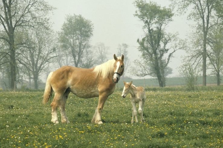 1742339-animals,horses,landscapes,trees.jpg