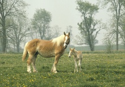 1742339-animals,horses,landscapes,trees
