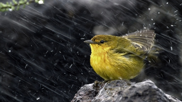 1743251-ice,snow,rain,birds,animals,stones.jpg