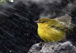 1743251-ice,snow,rain,birds,animals,stones