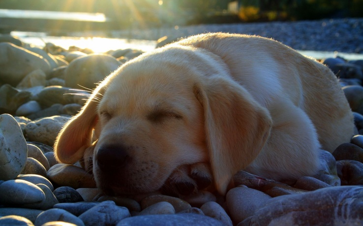 1745098-animals,dogs,sleeping.jpg