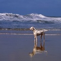1746841-animals,dogs,dalmatians,beach
