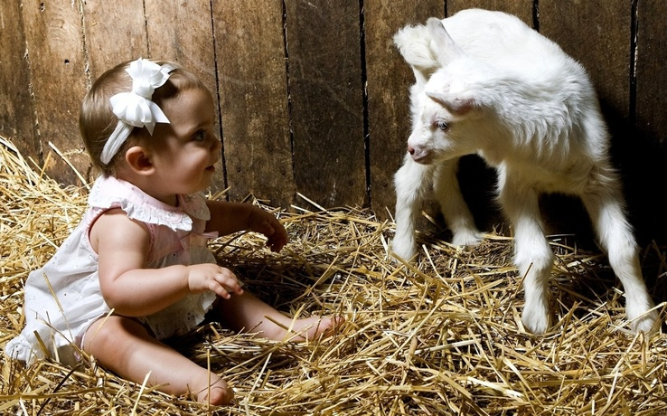 1752090-baby animals,baby,hay,lambs.jpg