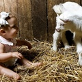 1752090-baby animals,baby,hay,lambs