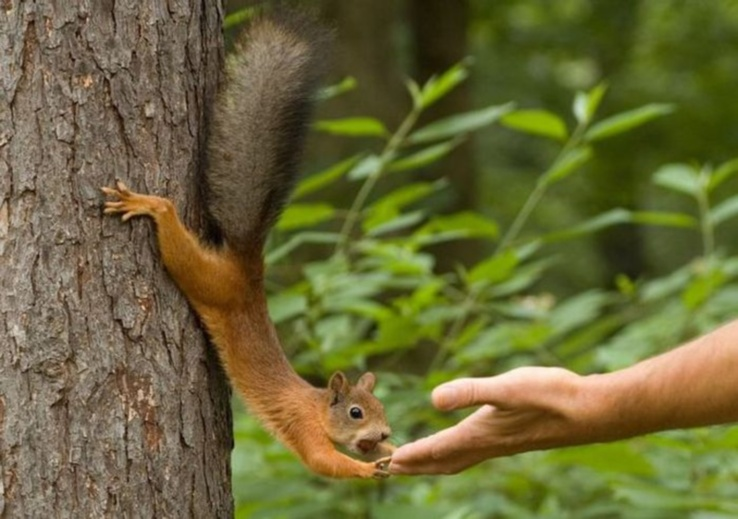 1754500-animals,squirrels.jpg