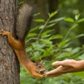 1754500-animals,squirrels