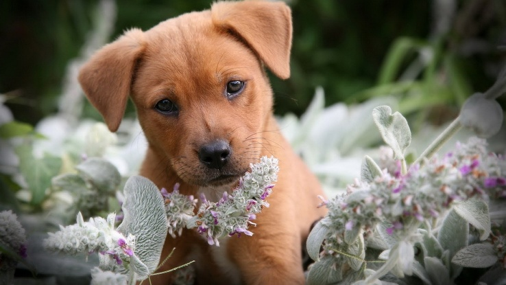 1771325-nature,flowers,animals,dogs,fur,plants.jpg