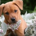 1771325-nature,flowers,animals,dogs,fur,plants