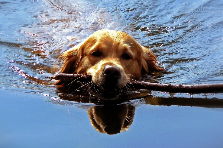 1775049-water,animals,dogs,swimming.jpg
