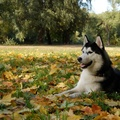 1777222-dogs,parks,trees,autumn,animals