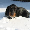 1780445-snow,animals,dogs,pets,setter