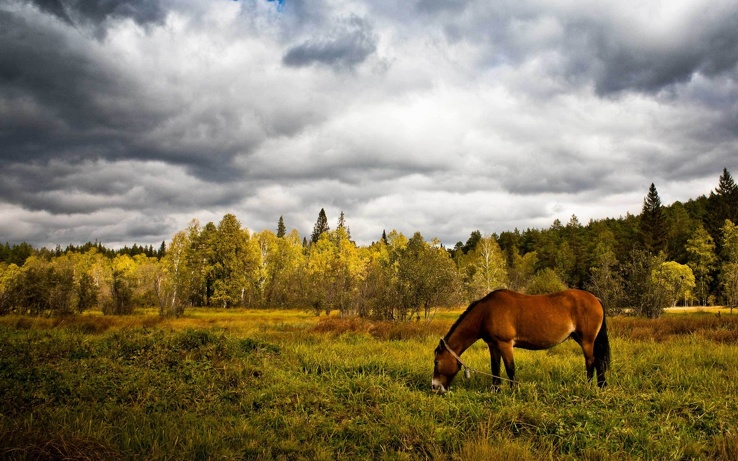 1783865-clouds,nature,forest,animals,grass,horses.jpg