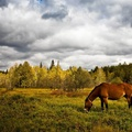 1783865-clouds,nature,forest,animals,grass,horses