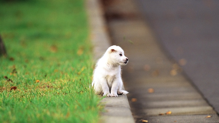 1794581-dogs,puppies,depth of field,pets,animals,grass.jpg