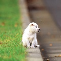 1794581-dogs,puppies,depth of field,pets,animals,grass