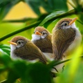 1798177-green,white,birds,leaves,brown,branches,baby birds