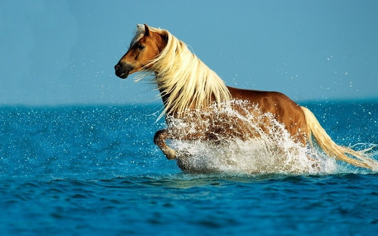 1814245-water,animals,horses.jpg