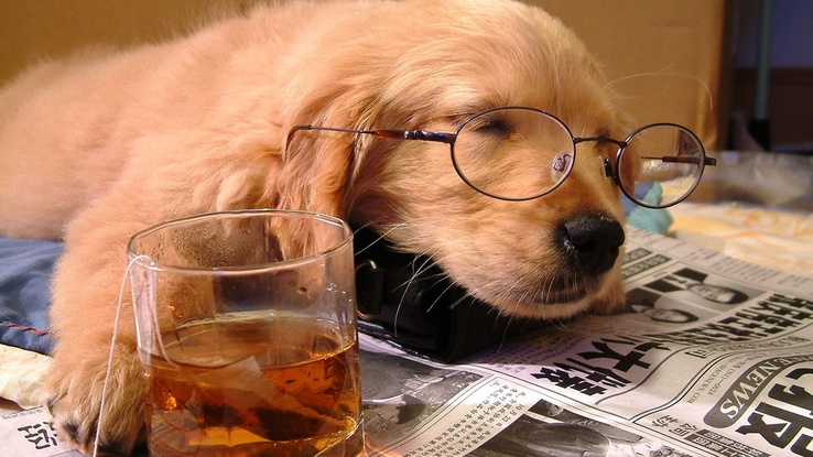 1814350-drinks,newspapers,scotch,animals,tea,dogs,glasses,whiskey,puppies,sleeping,drunk.jpg