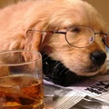 1814350-drinks,newspapers,scotch,animals,tea,dogs,glasses,whiskey,puppies,sleeping,drunk