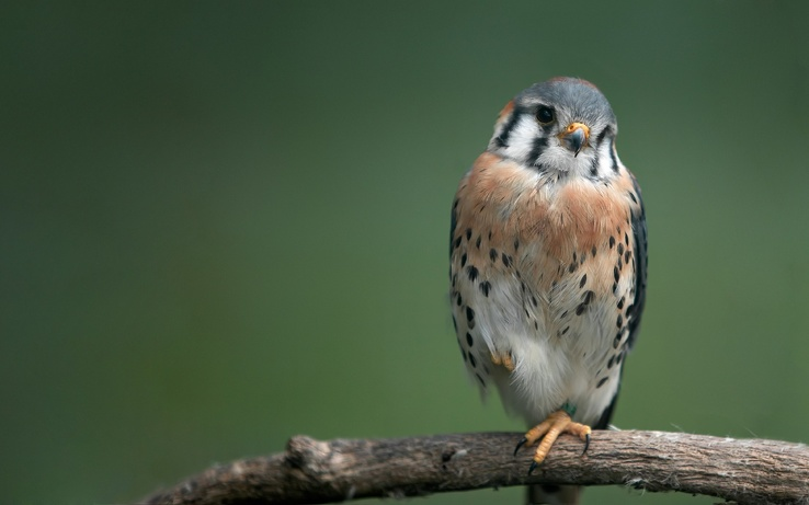 1818753-nature,birds,hawks.jpg