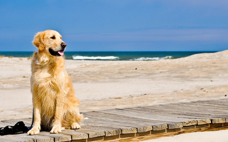 1839578-nature,beach,animals,dogs.jpg
