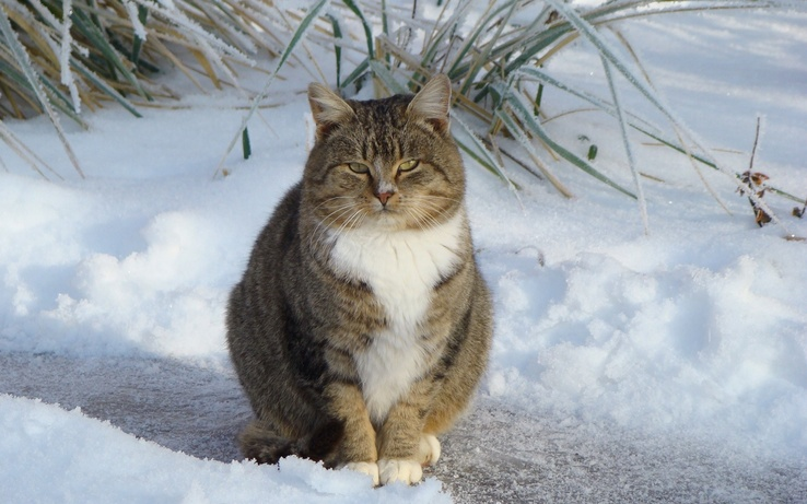 1711637-nature,winter,snow,cats,outdoors,Ukraine.jpg