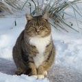 1711637-nature,winter,snow,cats,outdoors,Ukraine