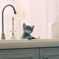 1716835-cats,animals,bathing