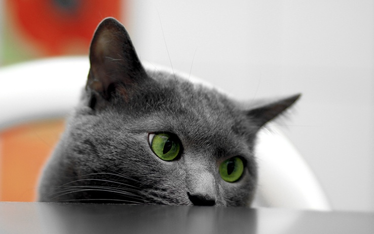 1716836-cats,animals,green eyes.jpg