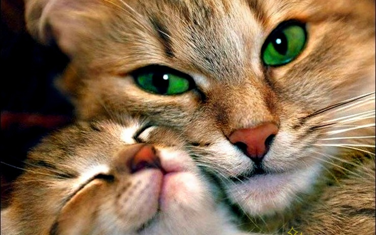 1721369-love,cats,animals,green eyes,kittens,adorable.jpg