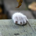 1737120-cats,animals,paws