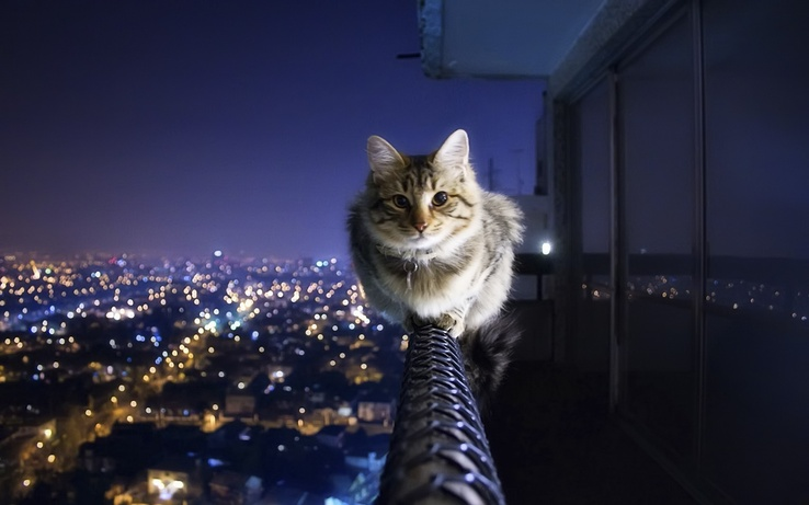1739822-cats,animals,cityscapes.jpg