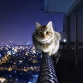1739822-cats,animals,cityscapes