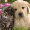 1751044-flowers,cats,animals,grass,dogs,puppies,kittens