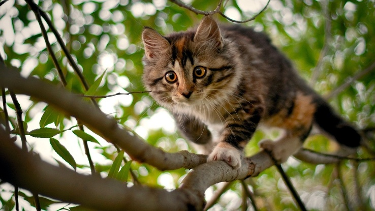 1771368-nature,trees,cats,animals,branches.jpg