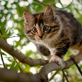 1771368-nature,trees,cats,animals,branches
