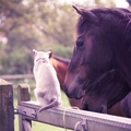 1807464-cats,animals,horses