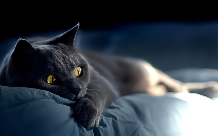 1808101-light,black,cats,animals,yellow eyes,pets.jpg