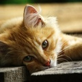 1823499-cats,animals